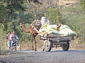 Sur les routes du Sheikawati (Inde) (8428303042).jpg