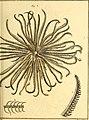 Tableau encyclopédique et méthodique des trois règnes de la nature (1791) (14581711977).jpg