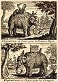 Tachard-elephant.jpg