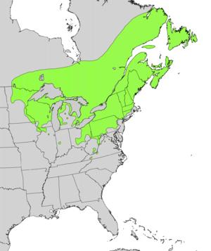 Taxus canadensis - Image: Taxus canadensis range map
