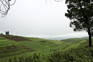 Meghalaya - Agriculture farms in Meghalaya (above) are on hilly terrain.