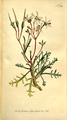 The Botanical Magazine, Plate 315 (Volume 9, 1795).png