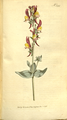The Botanical Magazine, Plate 324 (Volume 9, 1795).png