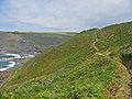The Coast Path at Brays Point Cornwall - geograph.org.uk - 102148.jpg