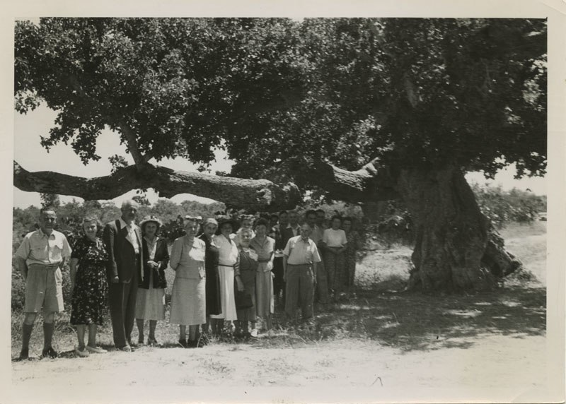 The Henrietta Szold Tree (5339163992)