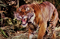 The Jungle Book (1942) Shere Khan.png