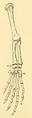 The Osteology of the Reptiles-192 iuyhgh jhg frt 22.png