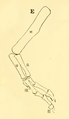 The Osteology of the Reptiles-193 uhyg hg df.png