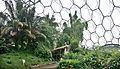 The Tropical Biome.jpg