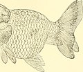 The complete aquarium book; the care and breeding of goldfish and tropical fishes (1936) (20484916609).jpg