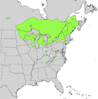 Thuja occidentalis range map.png