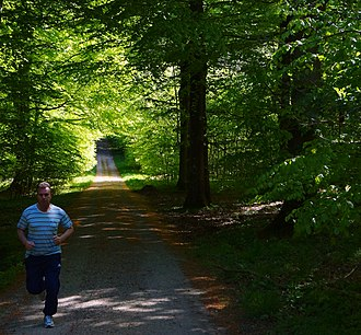 Hestehave Wood - Joggers use the wood, which is connected to the town Rønde via paths.