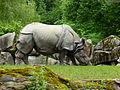 Tierpark München 2014 146.JPG