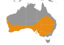 Tiliqua rugosa distribution map.png
