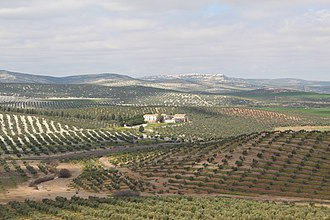 Arjona, Spain - Olive orchards with Arjona  in the distance