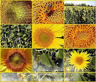 plante utile wikip dia