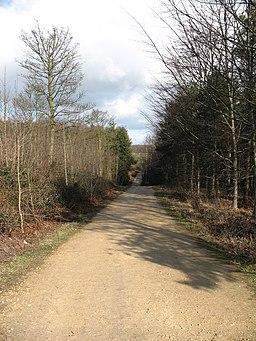 Track through Jenny Sober Plantation - geograph.org.uk - 720602