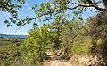 Trail in Murviel-lès-Béziers 03.jpg