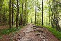 Trail in Slovenia 2.jpg