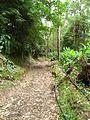 Trail to Lago do Fogo, São Miguel Island, Azores - panoramio - Eduardo Manchon (6).jpg