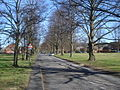 Tree-lined road across Colwall Green - geograph.org.uk - 907224.jpg