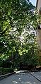 Tree Emma YSU 15.jpg