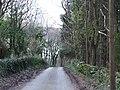 Treelined country lane - geograph.org.uk - 153137.jpg
