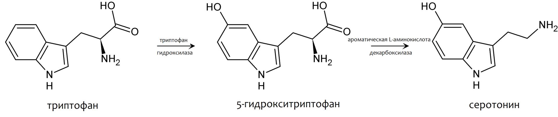 Синтез серотонина из 5 гидрокситриптофана