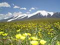 Tsambagarav Mountain.JPG