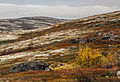 Tundra on the Kola Peninsula, Russia.jpg