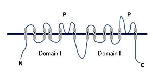 Two-pore channel - Image: Two Pore Channel TPC2