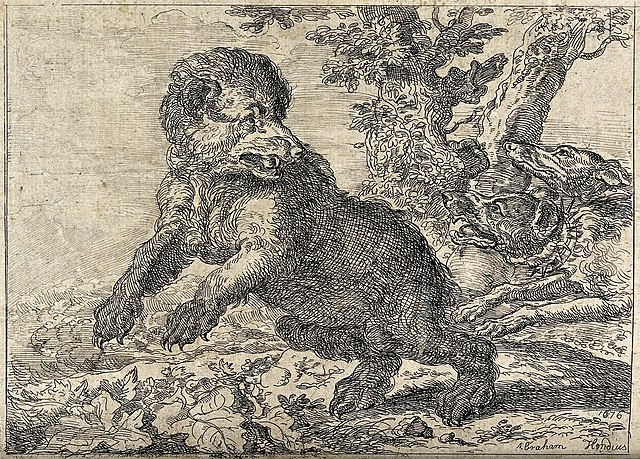 Etching of a bear being hunted by dogs. (Wikicommons)