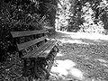 Una panchina nel bosco.JPG