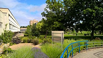 Cardiff University School of Medicine - The gardens at the Heath Park site