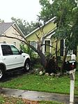 Uprooted tree, Hurricane Hermine, Valdosta, Georgia.jpg
