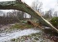 Vårby gård efter stormen Alfrida, jan 2019b.jpg