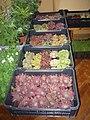 Výstava květin doplněna o prodej řemeslných výrobků v Pohledu 16.jpg