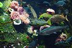 Vancouver International Airport aquarium 2.JPG