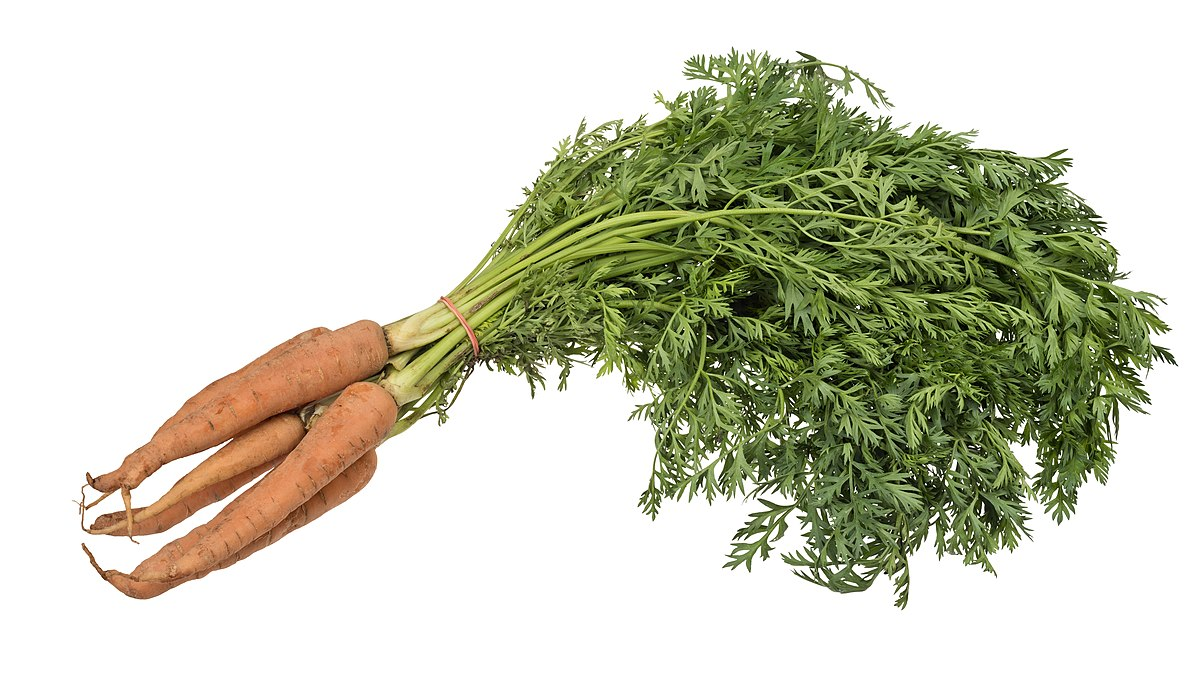 Carrot Wikipedia Последние твиты от maría zanahoria (@hizanahoria). carrot wikipedia