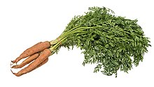 Vegetable-Carrot-Bundle-wStalks.jpg