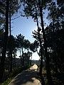 Viana do Castelo (31320090053).jpg