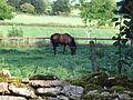 Vid kyrkogårdsmuren häst i hage 01.JPG