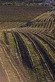 View of vineyards from Slunečná observation tower 2020 01.jpg