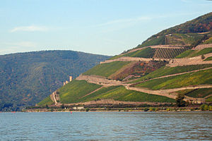 German wine - Steep vineyards on Rüdesheimer Berg overlooking river Rhine. These vineyards are located in the southwestern part of the region Rheingau at a bend in the river. These vineyards are planted with Riesling grapes, with some Spätburgunder (Pinot noir), and produce some of the finest wines in Germany.