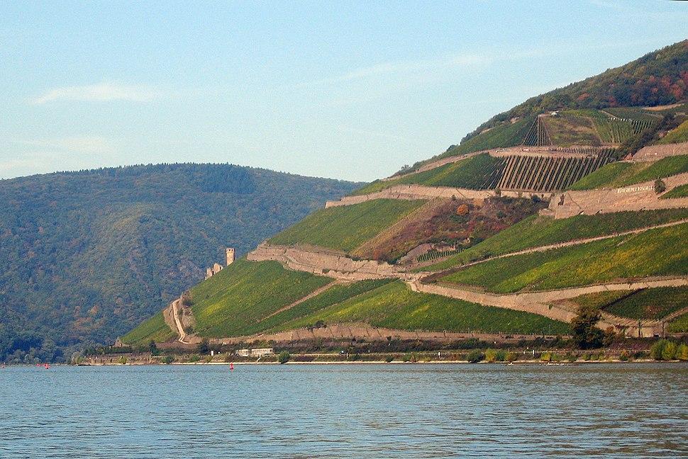 Vineyards at the Rhine bend