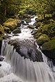 Wairere Stream, Kaimai Ranges (14260357831).jpg