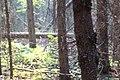 Wapta Falls Trail IMG 4936.JPG
