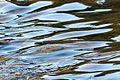 Water stream 01.JPG