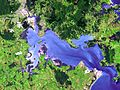Whangarei Harbour (satellite image).jpg