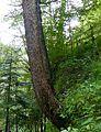 WikiProjekt Landstreicher Geotop Scheidegger Wasserfälle 10.jpg